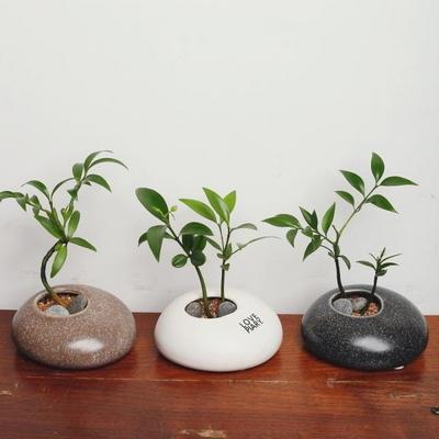 조약돌에 피어난 죽백 미니화분 3종세트 수경재배식물