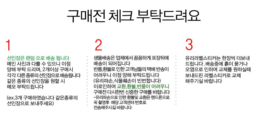 나의반려식물 커스텀 미니선인장 - 바이래빗, 9,000원, 허브/다육/선인장, 다육/선인장