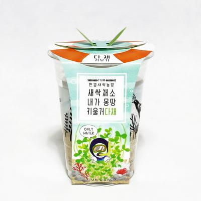 한컵새싹농장_다채키우기