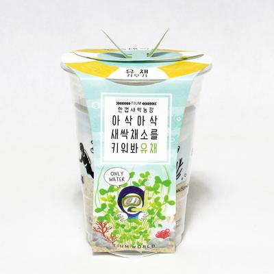 한컵새싹농장_유채키우기
