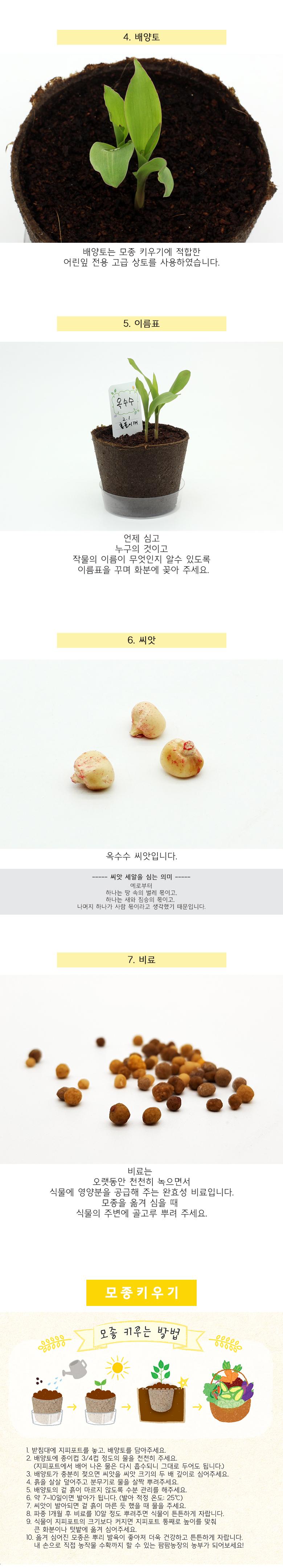팜팜농장_옥수수 모종키우기 - 틔움세상, 3,000원, 새싹/모종키우기, 새싹 키우기