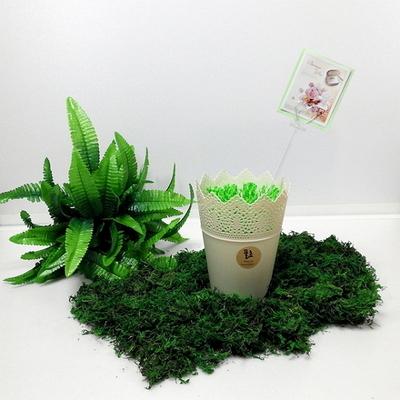풀초 심플Big 자연가습기 3색