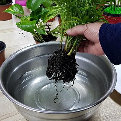수경재배 가습화분 심플 4색세트