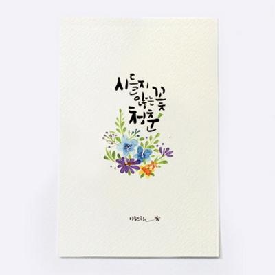 앳원스-캘리그라피 청춘엽서-시들지 않는 꽃 청춘