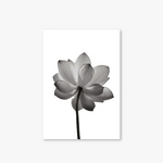 Monotone Series - Type B - Flower-2