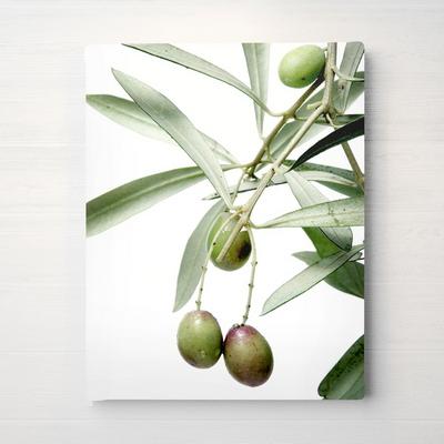 RYMD 북유럽 인테리어 액자 식물 올리브 포스터