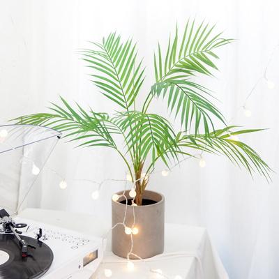 모던 아레카야자 나무