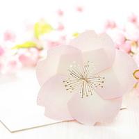 벚꽃카드 YD-20