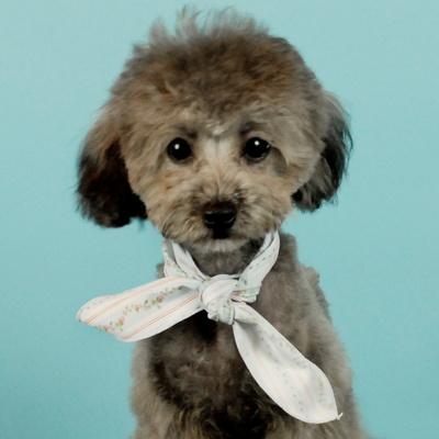 강아지 꽃문양 스카프