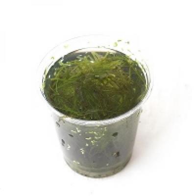 모스 한컵(종이컵)