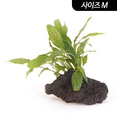 화산석 활착수초 M