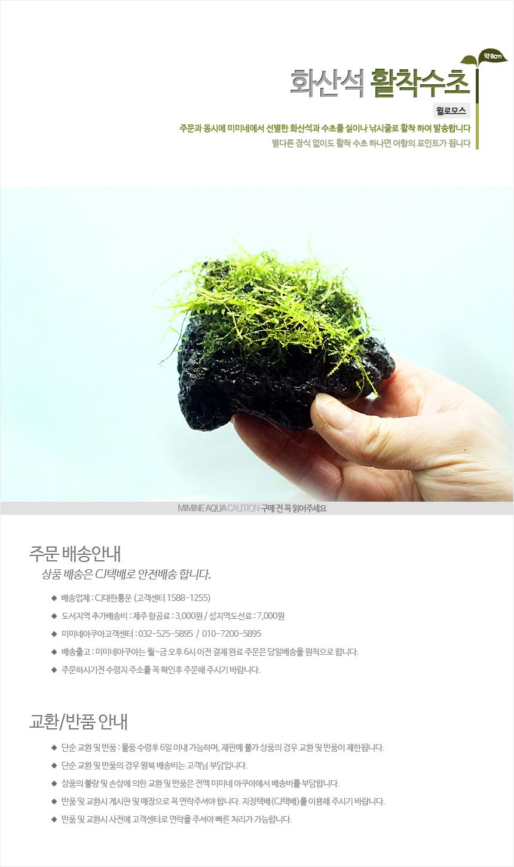화산석 윌로모스 - (활착모스 모스어항 음성수초) - 미미네아쿠아, 6,000원, 장식품, 수초
