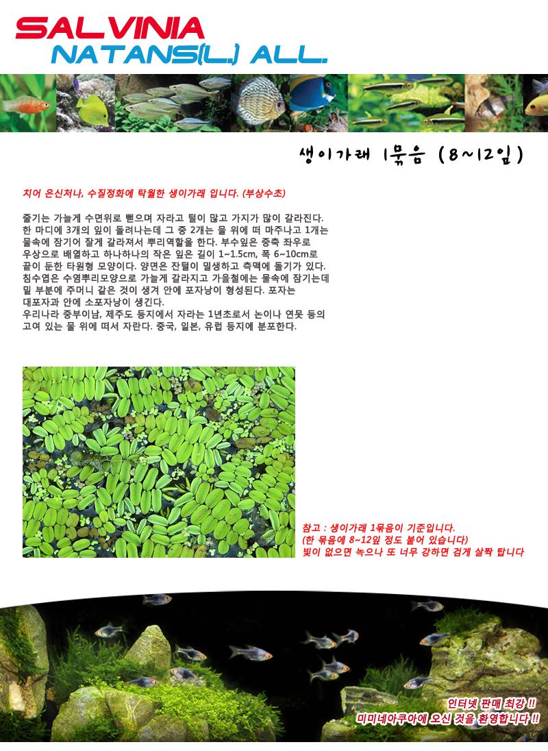 생이가래 2뿌리 (부상수초) - (치어은신처 수반) - 미미네아쿠아, 3,000원, 장식품, 수초