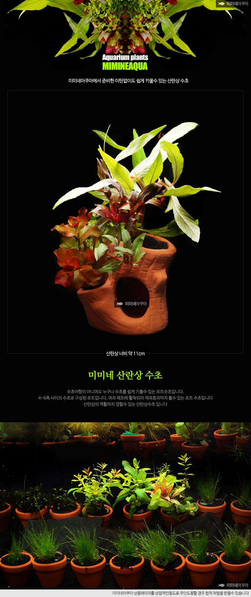 나무산란상 모듬수초(3가지) - 미미네아쿠아, 6,000원, 장식품, 수초