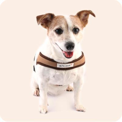 유아러피치 퐁퐁하네스(브라운,그레이)강아지 가슴줄