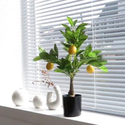 유주나무 레몬트리 거실대형화분 인테리어조화