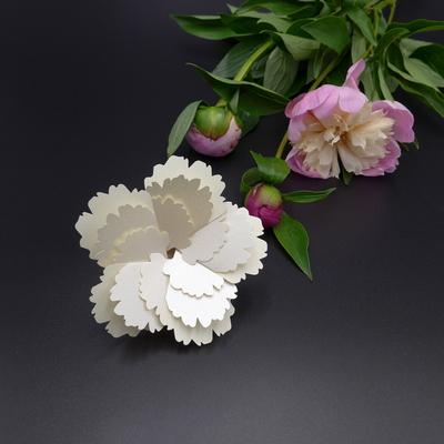화이트 플라워 White Flower