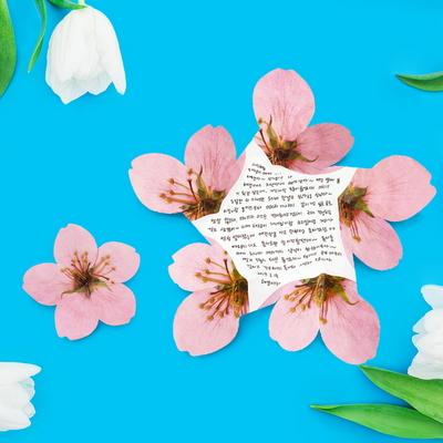 사과꽃 카드 세트 Apple Blossom Card SET