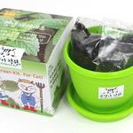 고양이정원 캣닢 재배세트 (화분)