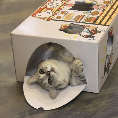 고양이 페이퍼 하우스 갔다치킨