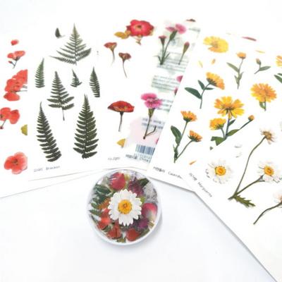 어프리 압화 스티커-다이어리꾸미기 꽃 다꾸 플라워