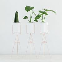 화이트링클 공기정화식물 화분스탠드세트