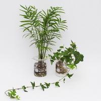 비이커 수경식물(아이비 or 테이블야자)