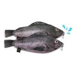 생선필통 우럭필통