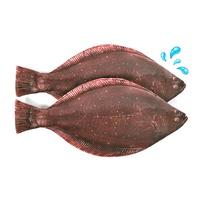 생선필통 광어필통