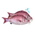 생선필통 참돔필통