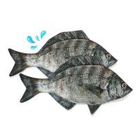 생선필통 감성돔필통