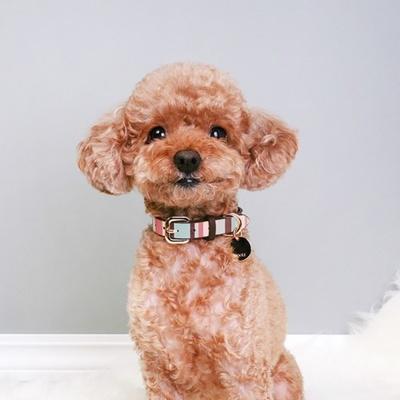 마카롱 스트라이프 패턴 고급 수제 강아지 목줄