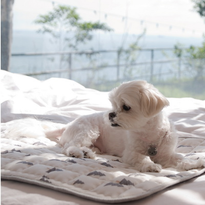 1013 PROJECT 강아지 고양이 인견 쿨매트