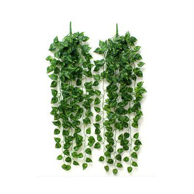 담쟁이 넝쿨(90cm)/식물원납품용 원예학원판매용