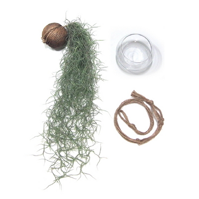 초록폭포-먼지먹는 수염틸란드시아 행잉세트