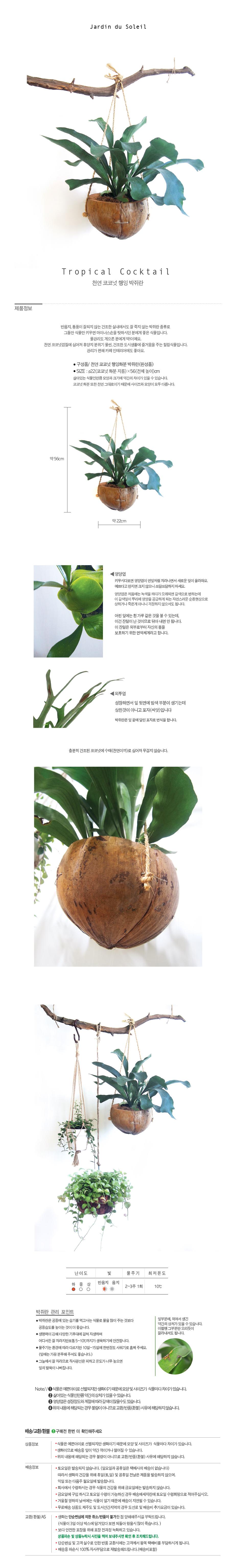 트로피칼 칵테일-박쥐란 천연코코넛 행잉화분 - 태양의 정원, 71,200원, 허브/다육/선인장, 공기정화식물