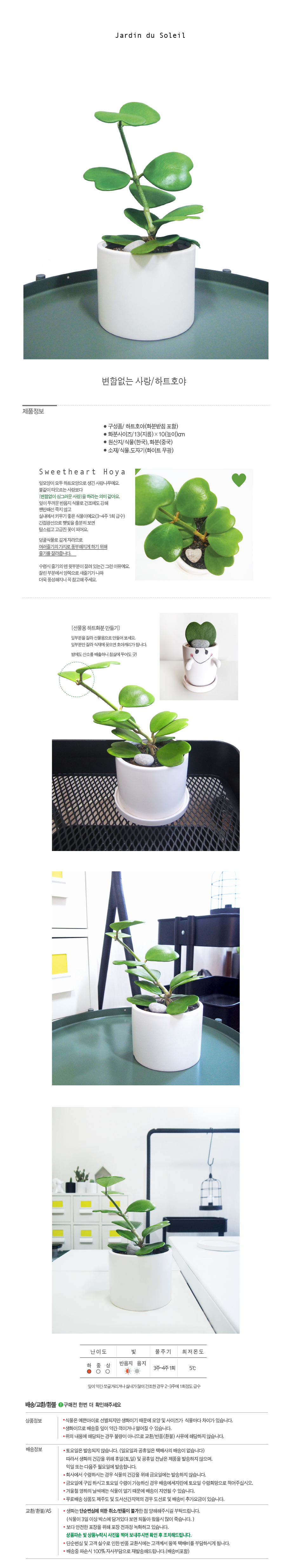변함없는 사랑나무-하트호야 - 태양의 정원, 26,250원, 허브/다육/선인장, 다육/선인장