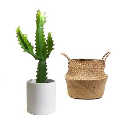 산타페-청화각 무광화이트화분 완성품+천연초 바구니