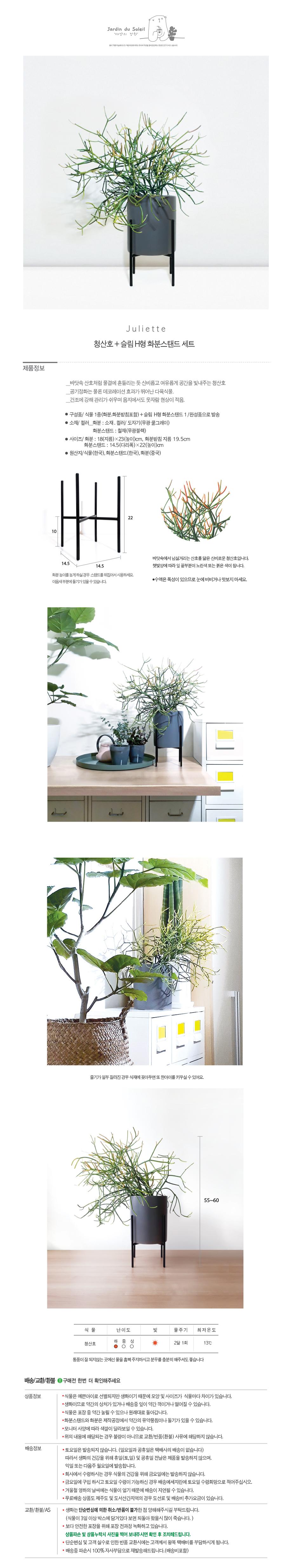 줄리엣-청산호+슬림 H형 화분스탠드 - 태양의 정원, 120,000원, 허브/다육/선인장, 공기정화식물