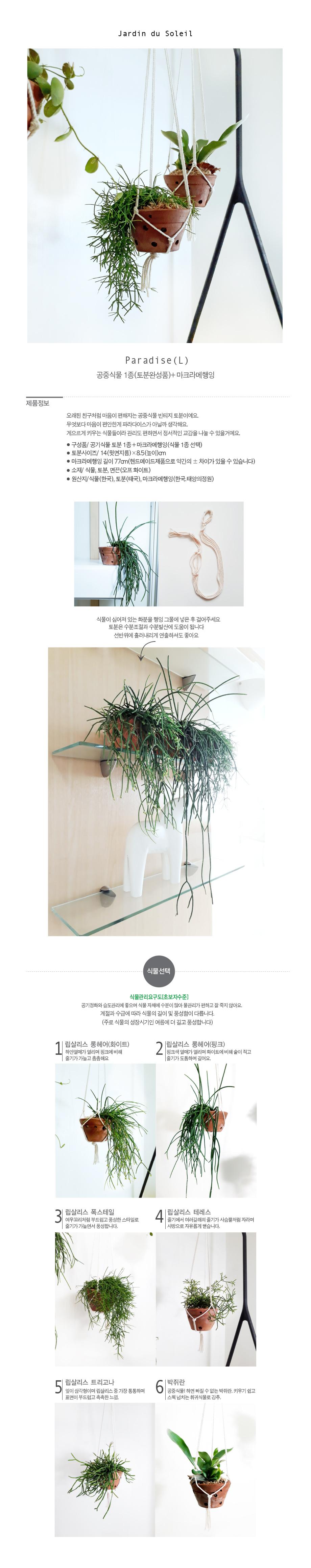 Paradise L-공중식물 1종 마크라메행잉 - 태양의 정원, 27,750원, 허브/다육/선인장, 수경식물/에어플란트