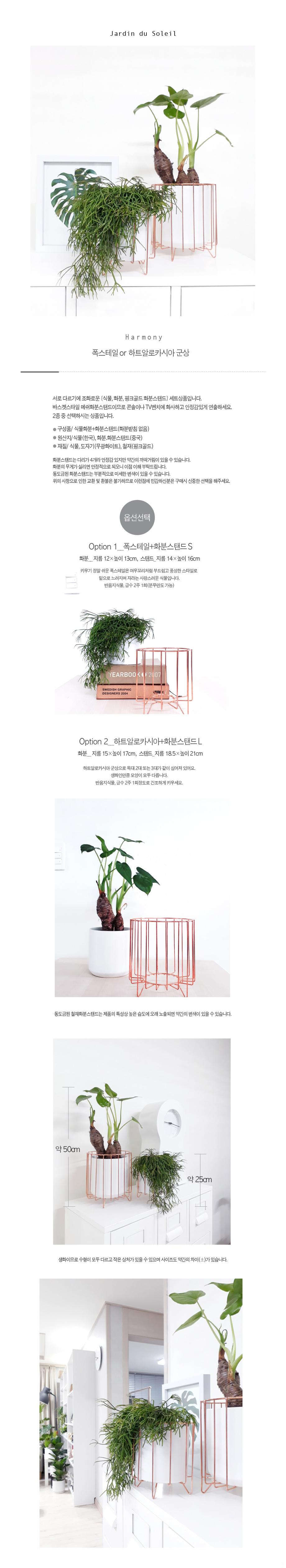 폭스테일 or 하트알로카시아 군상 화분스탠드세트 - 태양의 정원, 36,000원, 허브/다육/선인장, 공기정화식물
