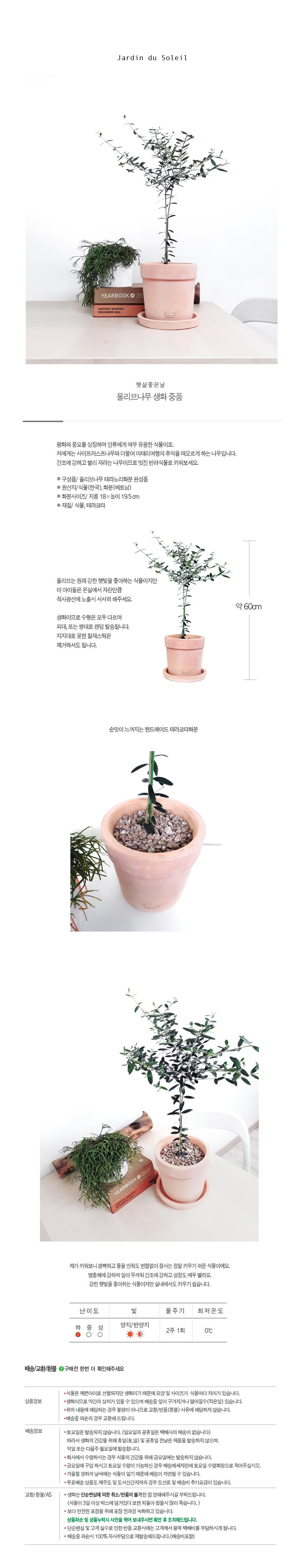 햇살좋은날- 올리브나무 생화 중품 - 태양의 정원, 69,000원, 허브/다육/선인장, 공기정화식물