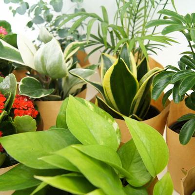 실내 공기정화식물 12종 특가 모음