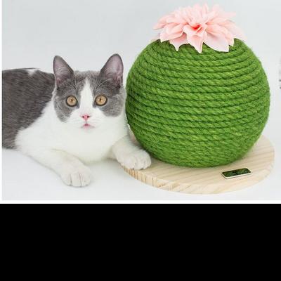 탁펫 고양이 선인장 스크래쳐