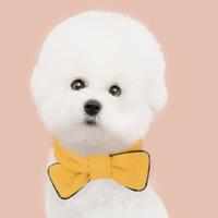 반려동물 리본 넥워머_yellow