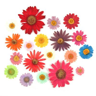 압화꽃 공예 DIY 만들기재료 마가렛 시리즈 옵션선택