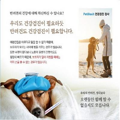 강아지 건강검진 페틸렉시트 검사 키트