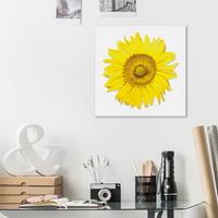 돈들어오는 노랑 해바라기 캔버스 미니 액자 25x25cm