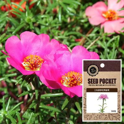 채송화 씨앗 (5000립)  꽃씨앗 허브씨앗 야생화씨앗