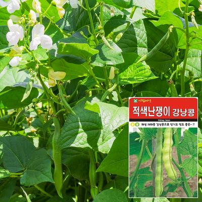 적색강낭콩 씨앗 (30g)